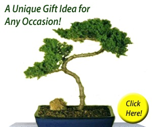 Bonsai Boy of New York Bonsai Trees and Accessories